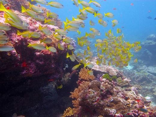 普吉岛旅游攻略之浮潜之旅