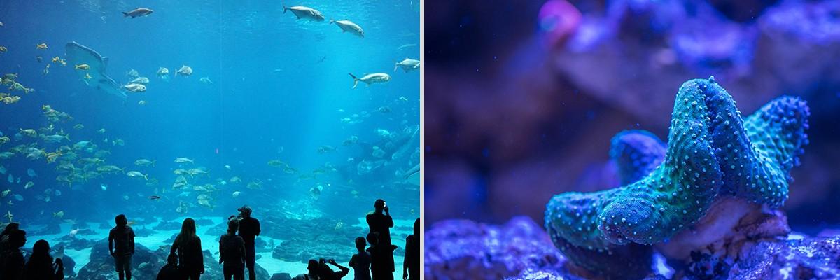 普吉中央水族馆